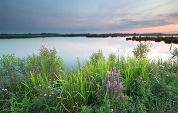 Common Florida Invasive Water Weeds