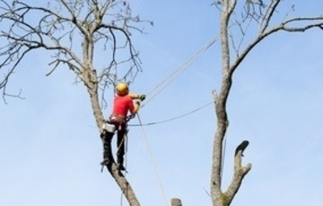 Leave Tree Trimming to the Professionals.
